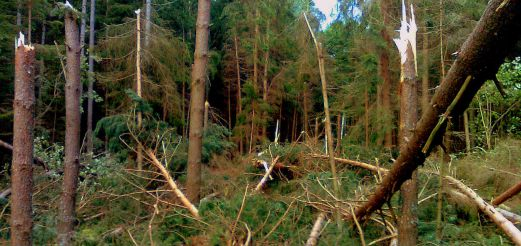 Las zniszczony po nawałnicy w Dobrym Mieście