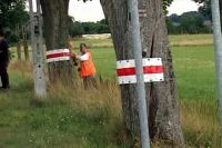 Odblaskowe drzewa na trasie Dobre Miasto - Orneta